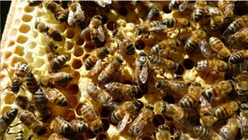 Perforated metal has a small but important role in the beekeeping industry.